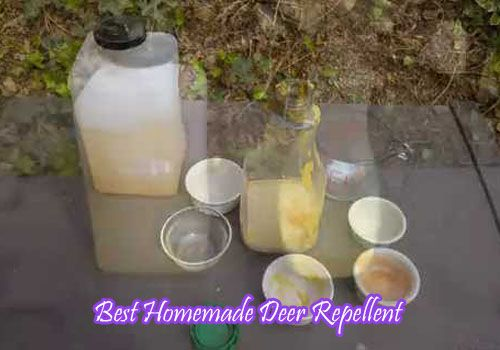 Homemade Deer Repellent- 3 Best Remedies