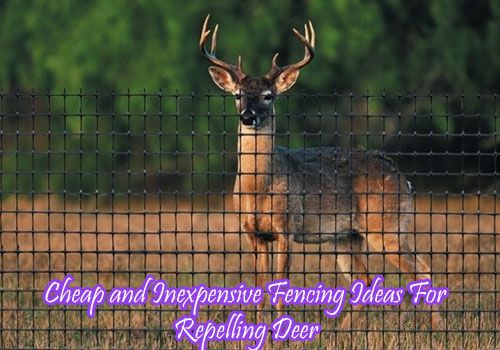18.Cheap and Inexpensive Fencing Ideas For Repelling Deer