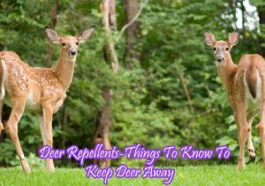 Deer Repellents-Things To Know To Keep Deer Away