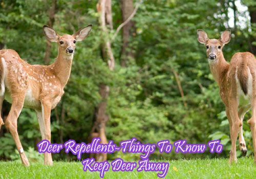 Deer Repellent-Things To Know To Keep Deer Away