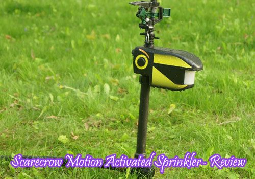 Scarecrow Sprinkler- A Motion Activated Sprinkler Review