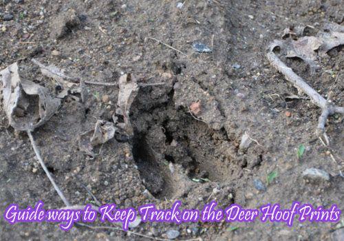 Guide to Keep Track on the Deer Hoof Prints