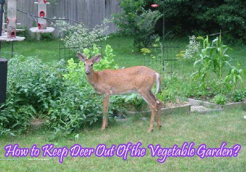 Vegetable Garden Deer Repellent, How To Keep Deer Out Of Vegetable Gardens