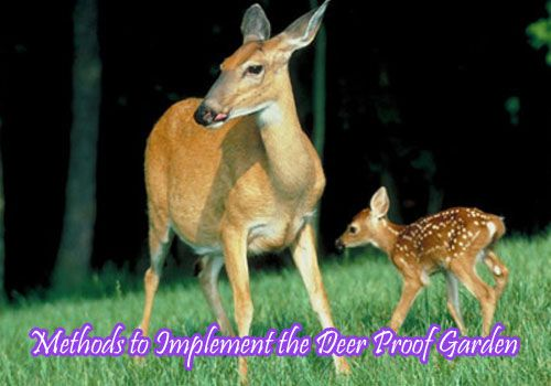 Methods to Implement the Deer Proof Garden