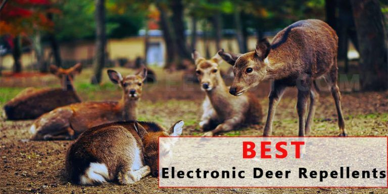 10 Best Eleactronic Deer Repellent [For Garden, Lawn, Yard, and Home]