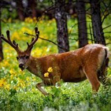 Deer control Tips