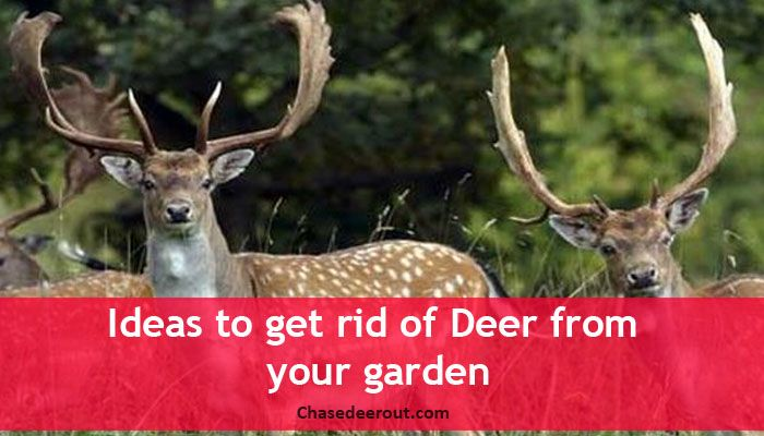 Ideas to get rid of Deer from your garden