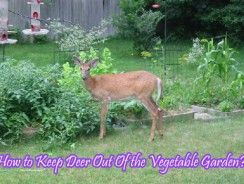 Charmant How To Keep Deer Out Of The Vegetable Garden?